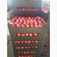 Купим яблоки свежие