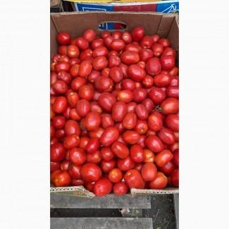 Продам помидор ( некондиция )