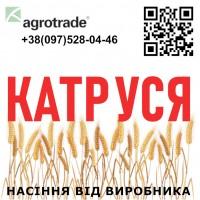 Семена озимой мягкой пшеницы Катруся от ...