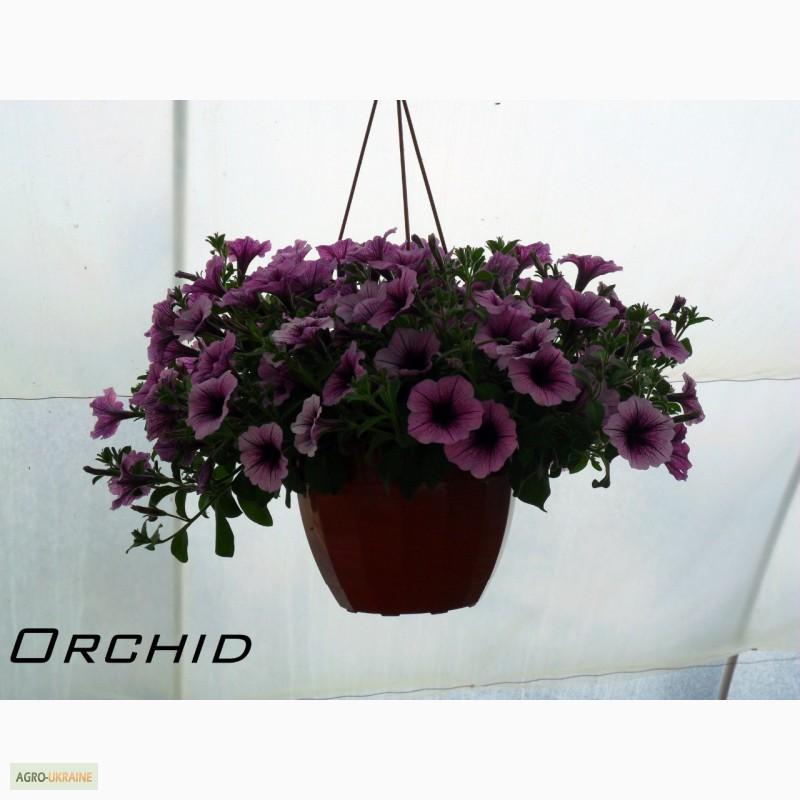 Цветы для рассады на заказ подарок сотруднику на день рождения мужчине до 1000 рублей