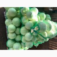 Продам капусту Золтон Отлично сохранилась
