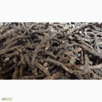 Аир корень сушеный