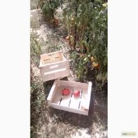 Ящик для помидор