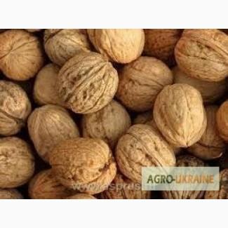 Компания Хорус Груп ТОВ купит дорого грецкий орех в скорлупе 2017 года