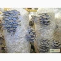 Готовые грибные блоки вешенки и шиитаке