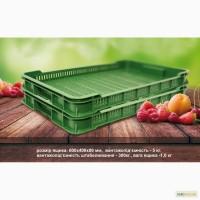 Продам ящики для малины, смородины, черники, брусники, клюквы (лесных ягод) новые Луцк