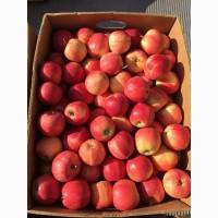 Продам яблока ГАЛА