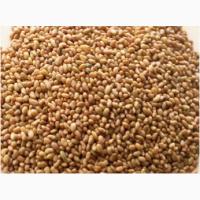 Продам семена ЛЮЦЕРНЫ большим и малым оптом