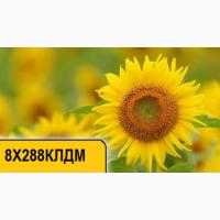 Купить подсолнечник 8Х288КЛДМ от компании Дау Сидс