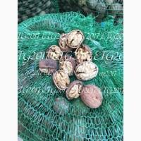 Продажа ядра грецкого ореха. 2017