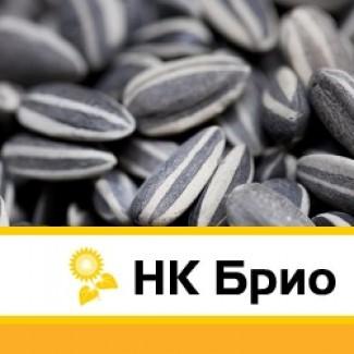 Семена подсолнечника НК Брио Syngenta