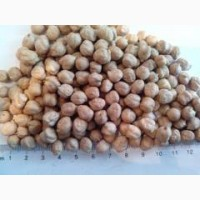 Продаем высококачественные семена нута Триумф
