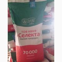 Продам гібрид кукурудзи ПОЛТАВА (урож.2017 р.)