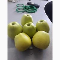 Продам яблука сорт- Голден