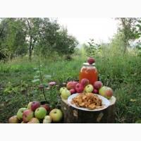 Сок яблочный домашний с горного сада Карпат