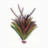 Фасоль вигна Роуге, для спаржевого использования, кустовая, 25 семян