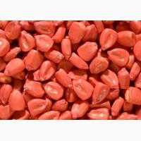 Семена кукурузы Монсанто ДКС 3420, 3472, 4014, 3811, 3705, 3511, 2960 и другие. (Импорт)