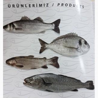 Продам морскую рыбу