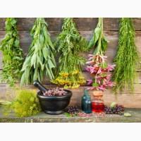 Лекарственные травы(2)
