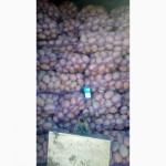 Куплю картоплю у тернопільській області