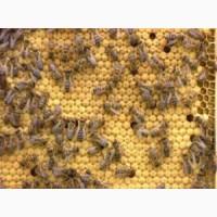 Продам пджолопакети