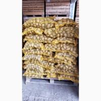 Прямые поставки картофеля с Румынии