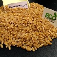 Продам пшеницу Дурум/ HARD WHEAT, Durum
