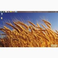 Куплю пшеницу самовывоз