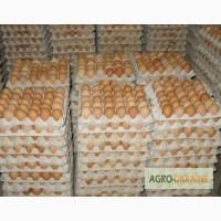 Яйцо куриное С0, С1, С2 опт