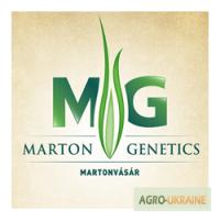 Cемена кукурузы венгерской селекции