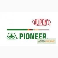 Продам гібрид соняшника P64LE11 (PIONEER) (Під гранстар)
