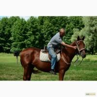Кобыла тракененской породы, лошадь с хорошим происхождением