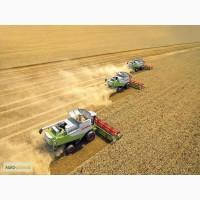Продаем СЕМЕНА зерновых гибридов пшеницы кукурузы семечки, рапса, сои
