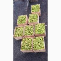 Продам яблоки на переработку 1, 5тн