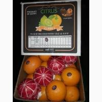 Апельсины (Египет) Navel