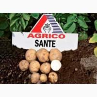 Фермерське господарство реалізує картоплю білих та рожевих сортів
