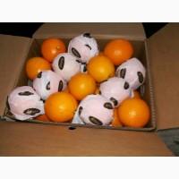 Апельсин Валенсия прямые поставки Египет Orange Valencia