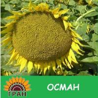 Насіння соняшнику Осман / Подсолнечник ОСМАН под ЕвроЛайтинг А-F, Засухоустойчив