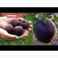 Саженцы ананасного и чкрного абрикоса