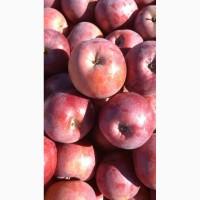 Продам оптом яблоки. Разные сорта