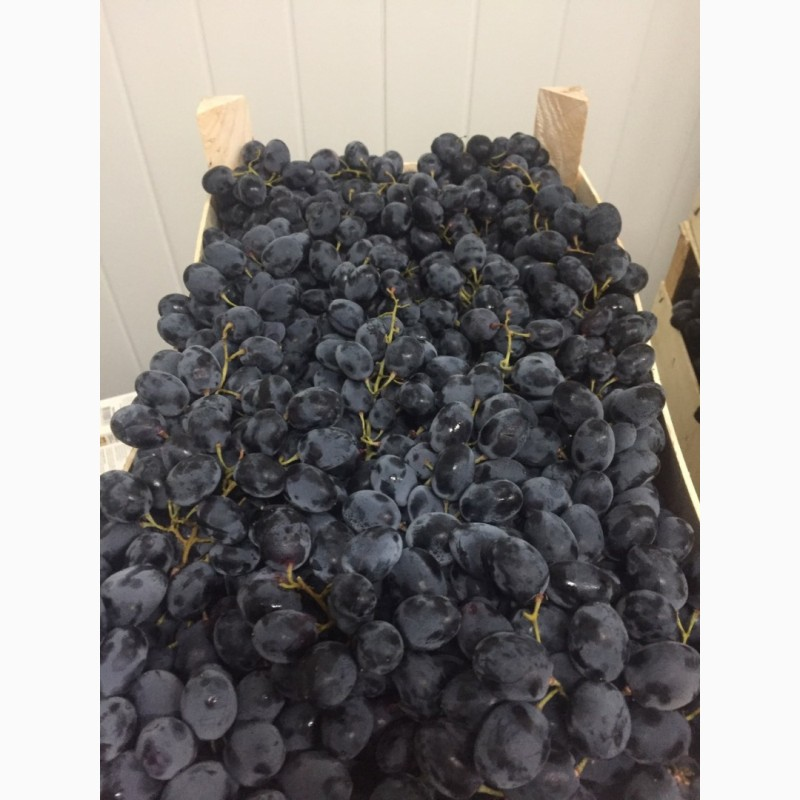 Продам виноград Молдова, Херсонская обл.