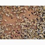 Продам бджолопакеты с 25, апреля