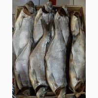 Продам вяленную речную рыбу
