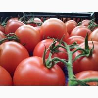 Предлагаю помидоры