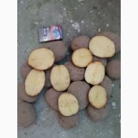 Продам товарный картофель, сорт Вектор и Гала