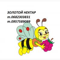 Оптом покупаем мед от 500 кг