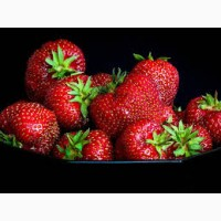 Купуємо полуницю заморожену по всій території України