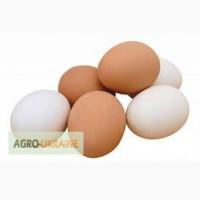 Продам куриные яйца категорий СВ С0 С1 С2 С3 цена от 1.15 грн