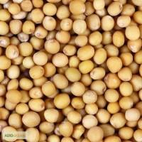 Продам горчицу белую и другие семена, Сумская область Конотоп