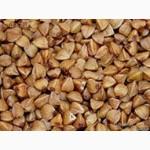 Семенной/кормовой ОвесДеснянский.Элитный канадский сорт:Ячменя-Дункан, Пшеницы-Новел, ярова